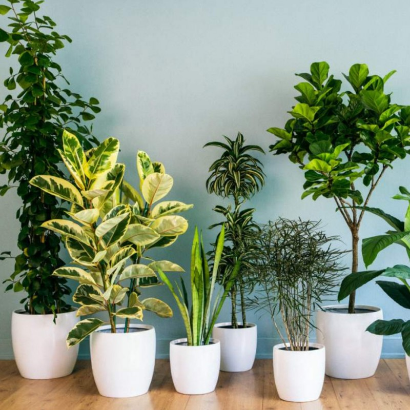Easy house plants to look after over Christmas